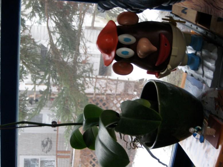 potato head and plant