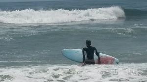 phoebe surfing